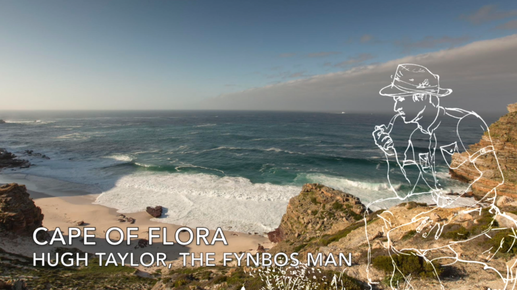 Cape_Point_E03 Cape of Flora - Hugh Taylor, the Fynbos Man