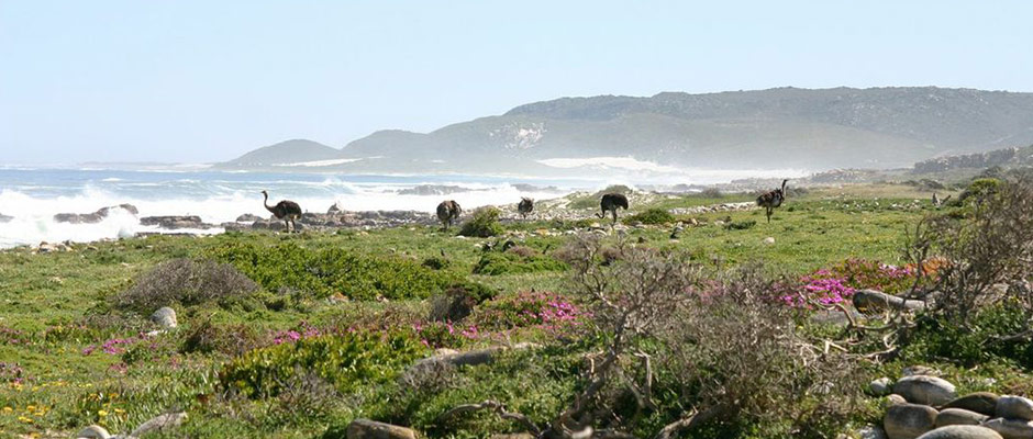 The wildlife found at Cape Point in Table Mountain National Park