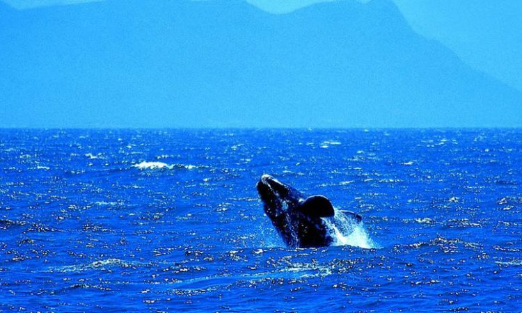 Watching Whales at Cape Point