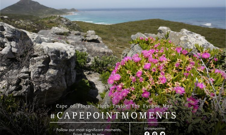 Cape of Flora - Cape Point's fynbos