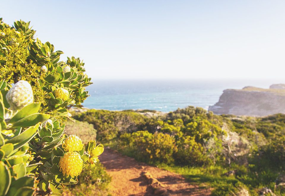 Table Mountain National Park and Differential Tariffs