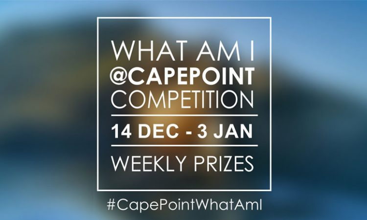 WIN with Cape Point this Summer