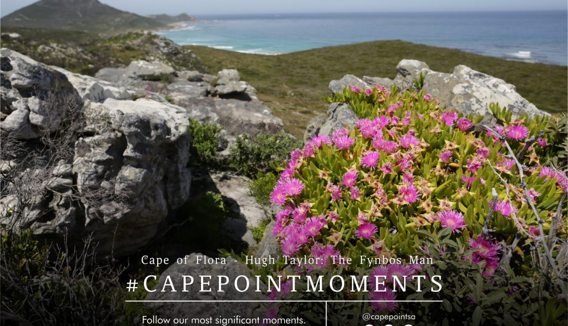 Cape of Flora – Cape Point's fynbos