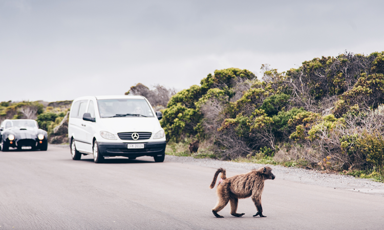 Media Release: SANParks opens the Cape of Good Hope section for self-drive day excursions